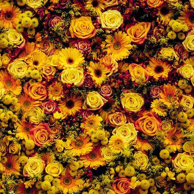 Visit the Chelsea Flower Show