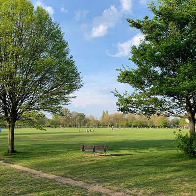 Spend some quality time in nature at Ravenscourt Park