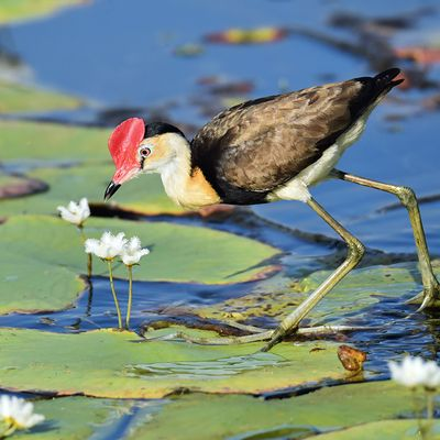 Spend the day at Walthamstow Wetlands